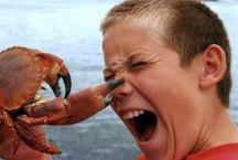 CrabPinch